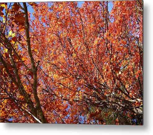 Fall Metal Print featuring the photograph Fall In The Blue Ridge Mountains by Flavia Westerwelle