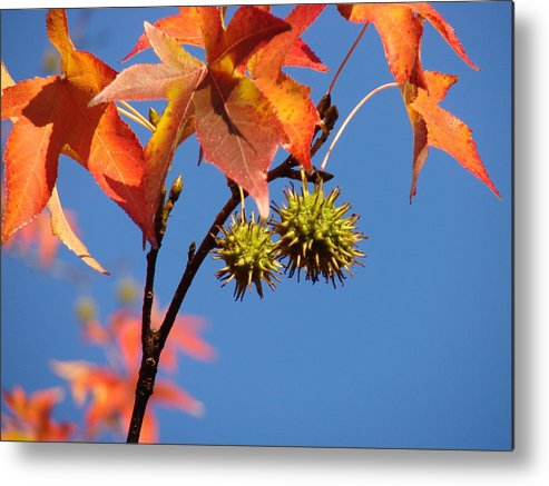 Autum Leaves Metal Print featuring the photograph Fall Leaves by Liz Vernand