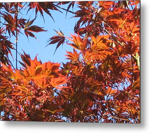 Leaves Metal Print featuring the photograph Fall Leaves by Valerie Josi