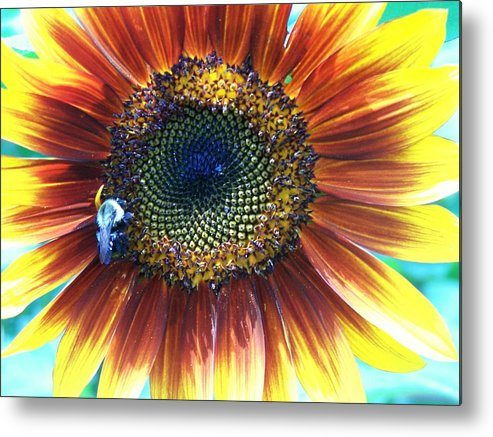 Sunflowers Metal Print featuring the photograph Fall Sunflower by Vijay Sharon Govender