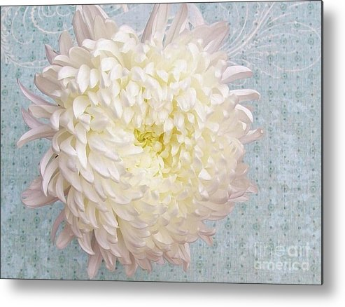 Photo Metal Print featuring the photograph Feathered Mum Close Up by Marsha Heiken