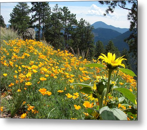 Orange Metal Print featuring the photograph Field Of Golden Poppies by Jody Neumann