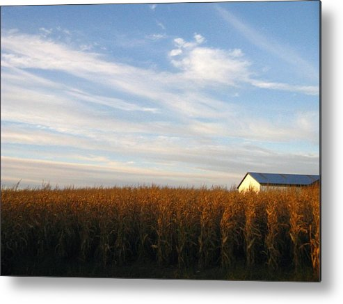 Country Metal Print featuring the photograph Fields Of Gold by Rhonda Barrett