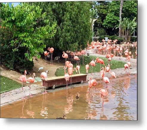 Flamingo Metal Print featuring the photograph Flamingos by Ludy Ortiz