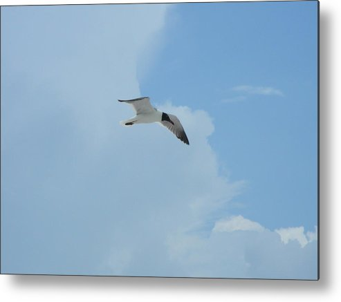 Flying Metal Print featuring the photograph Flight by Peter McIntosh