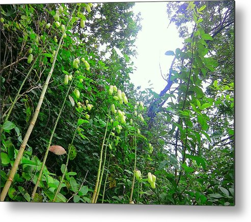 Rainforest Metal Print featuring the photograph Floating Peanuts by Charles Jennison