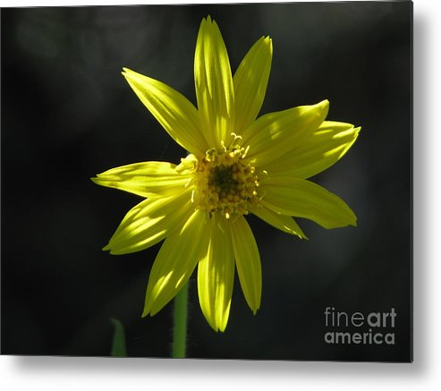 Light Metal Print featuring the photograph Floral by Amanda Barcon