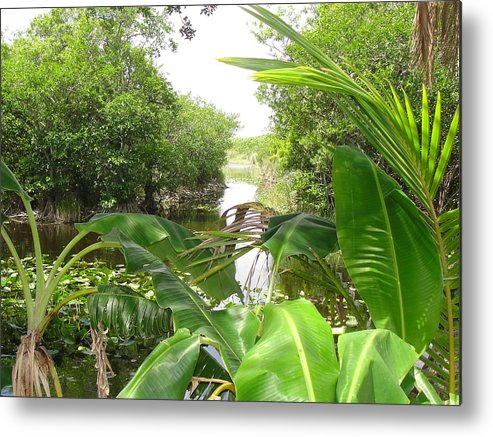 Landscape Metal Print featuring the photograph Florida Everglades River Scene by Kathi Tesone