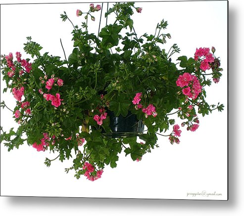 Flowers Metal Print featuring the photograph Flower Pot by Gerard Yates