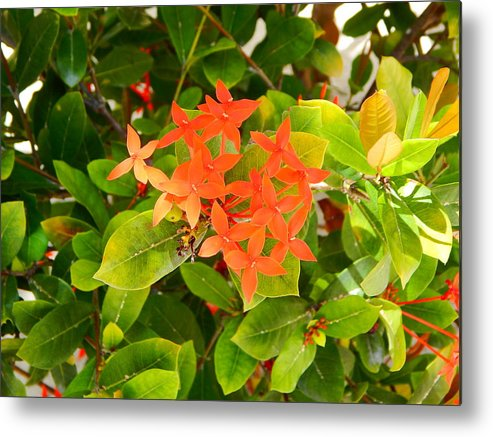 Flowers Metal Print featuring the photograph Flowers And Foliage by Virginia Kay White