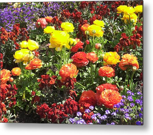 Flower Metal Print featuring the photograph Flowers by Sascha Meyer
