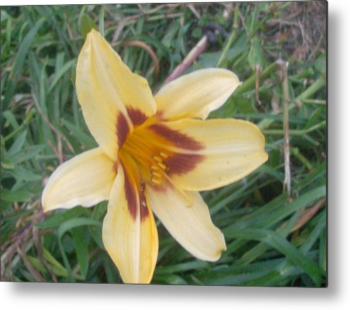 Flowers Yellow Metal Print featuring the photograph Flowers2 by Amber Testerman