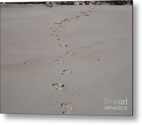 Sand Metal Print featuring the photograph Follow Me by PJ Cloud