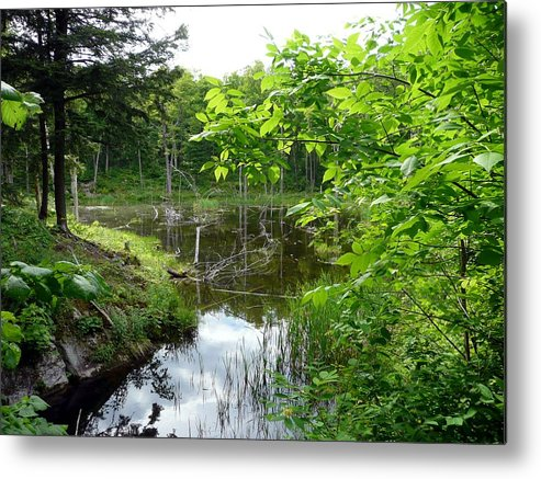 Landscape Metal Print featuring the photograph Forest Lake Hideout by Dmytro Toptygin