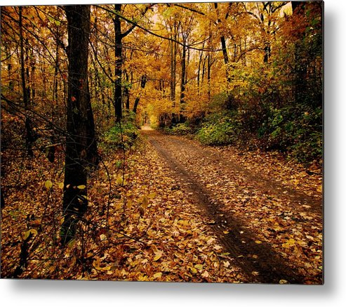 Forest Metal Print featuring the photograph Forest Trail by Scott Hovind