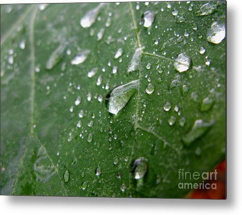 Leaf Metal Print featuring the photograph Fresh by PJ Cloud