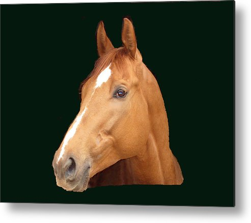 Thoroughbred Metal Print featuring the painting Friday Night Lights by Kim