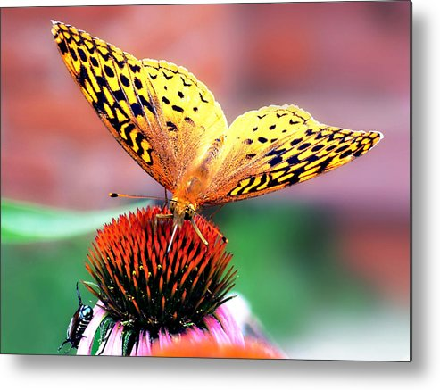 Butterfly Metal Print featuring the photograph Friends by Julie Geiss