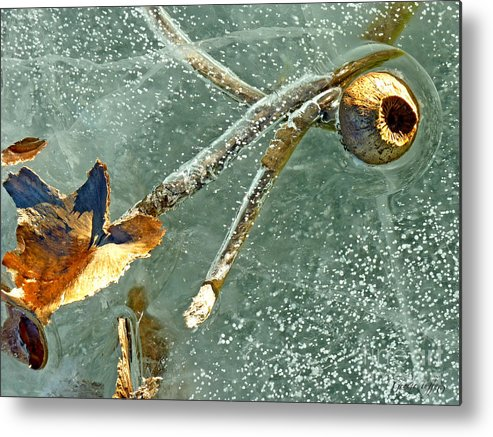 Ice Photography Metal Print featuring the photograph Frozen Water Lily by George Tuffy