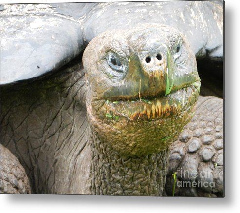 Galapagos Island Metal Print featuring the photograph Galapagos Giant Tortoise by Megan Thompson
