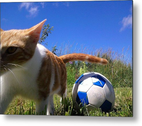 Cats Metal Print featuring the photograph Game Over by Charles Jennison