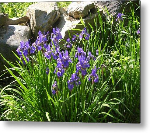 Flowers Metal Print featuring the photograph Garden Elegance by Peter Williams