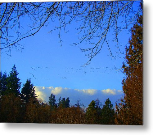 Landscape Metal Print featuring the photograph Geese Across The Sky by Lisa Rose Musselwhite