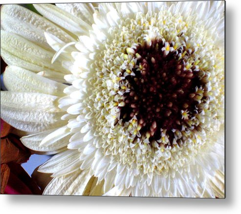 Gerbera Metal Print featuring the photograph Gerbera by Erika Lesnjak-Wenzel