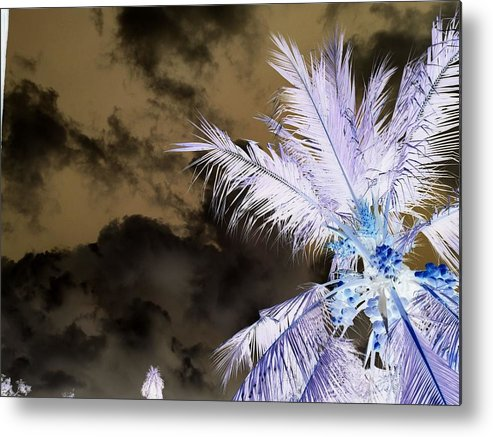 Inverted Scary Tropical Mysterious Coconut Trees Metal Print featuring the photograph Ghost Tropical by Okitha Dharmapriya