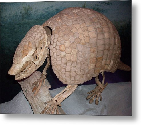 Giant Armadillo Metal Print featuring the photograph Giant Armadillo 2 by Warren Thompson