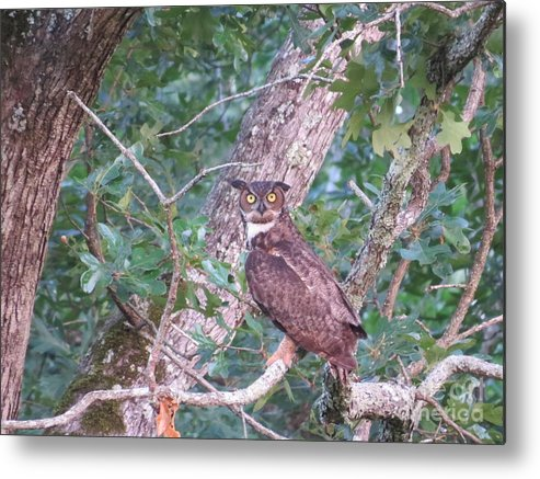 Great Horned Owl Metal Print featuring the photograph Give A Hoot by Charles Green
