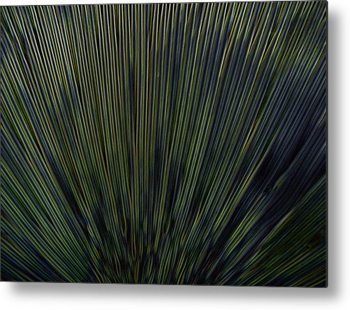 Mushroom Metal Print featuring the photograph Glowing Fins by Lindsay Clark