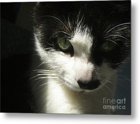 Cat Eyes Metal Print featuring the photograph Go Ahead Make My Day by Kristine Nora