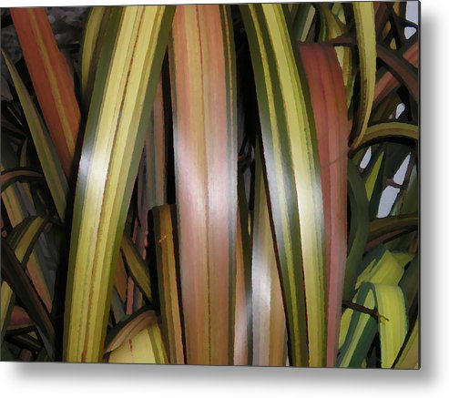 Garden Grasses Flax Nz Native Green Stripes Abstract Nature Flora Fauna Metal Print featuring the photograph Going Native by Sher Green