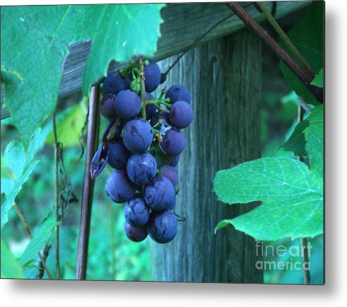 Grapes Metal Print featuring the photograph Grapes by Zofia Williams