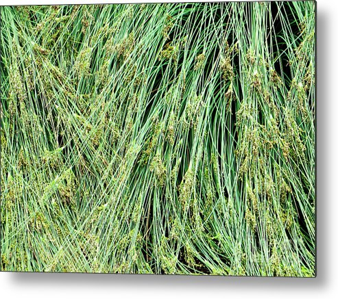 Adrian March Metal Print featuring the photograph Grasses 4 by Adrian March