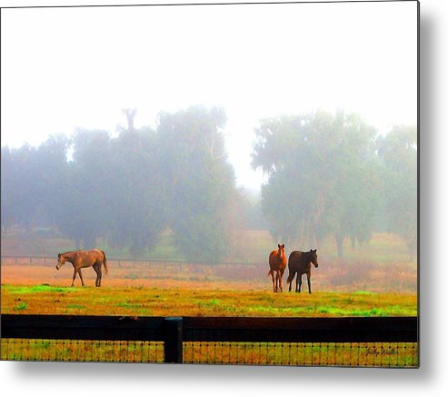 Horses Metal Print featuring the photograph Grazing by Judy Waller