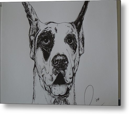 Dogs Metal Print featuring the drawing Great Dane by Raymond Nash