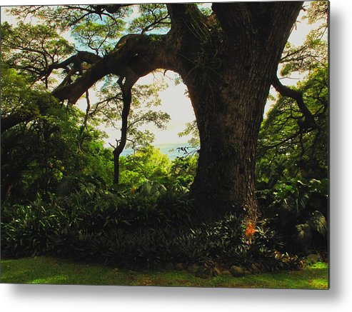 Tropical Metal Print featuring the photograph Green Giant by Ian MacDonald