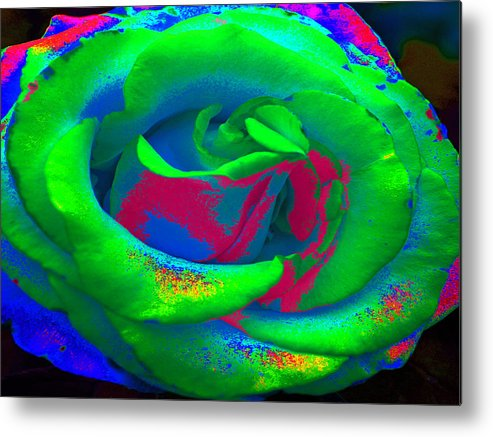 Rose Metal Print featuring the painting Groovin Rose by Kim