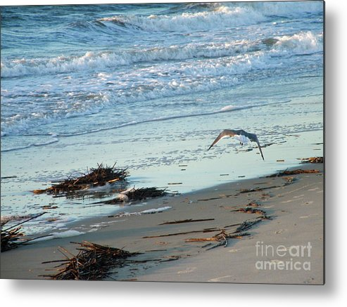 Gull Metal Print featuring the photograph Gull Over Tybee Island Beach by Doris Blessington
