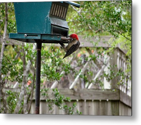 Bird Metal Print featuring the photograph Hanging On by Camera Candy