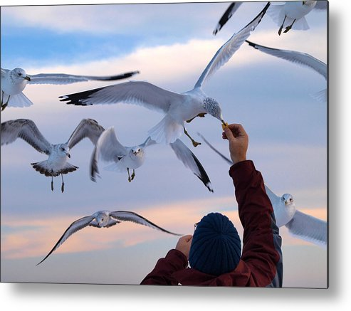 Ann Keisling Metal Print featuring the photograph Have A Cracker by Ann Keisling