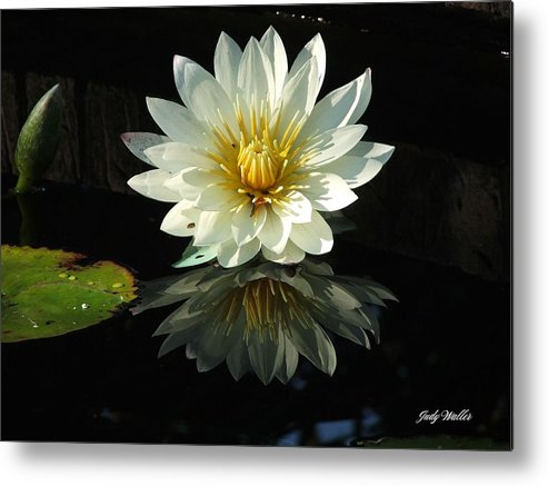 Flower Metal Print featuring the photograph Haven Hospice Water Lily by Judy Waller