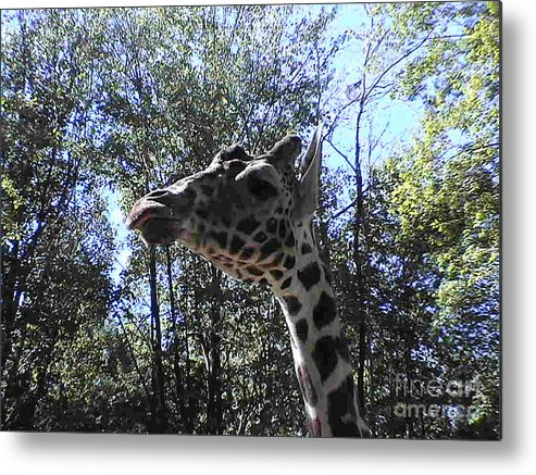 Head Metal Print featuring the photograph Head Giraffe by Daniel Henning