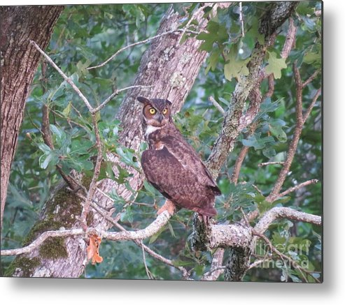 Great Horned Owl Metal Print featuring the photograph Head On A Swivel by Charles Green