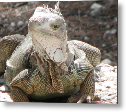 Iguana Metal Print featuring the photograph Hello by April Camenisch