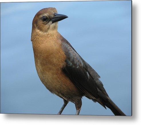 Bird Metal Print featuring the photograph Hi There by Stacey May