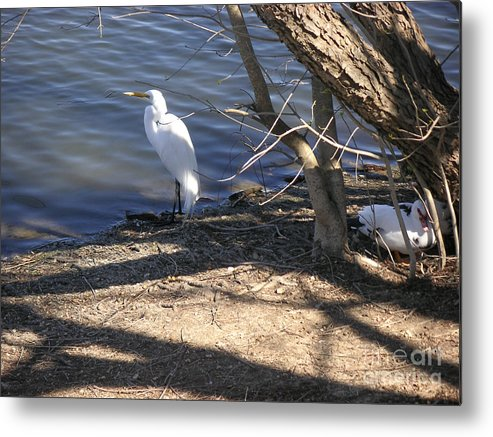Nature Metal Print featuring the photograph Hiding And Seeking by Lucyna A M Green