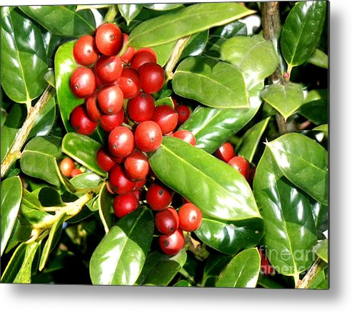 Nature Metal Print featuring the photograph Holly In Summer by Lucyna A M Green